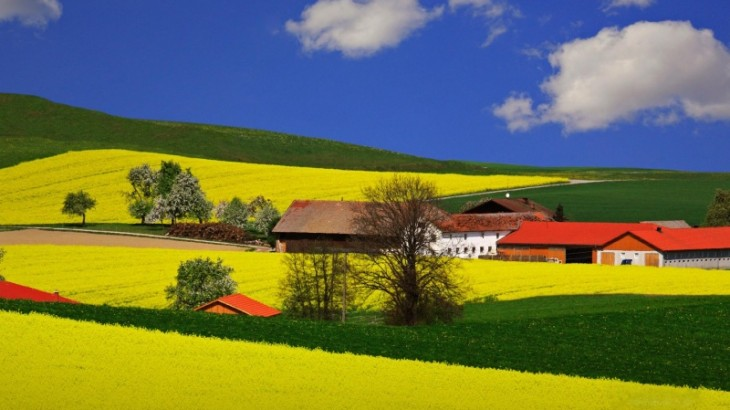summer-field-landscape-800x600
